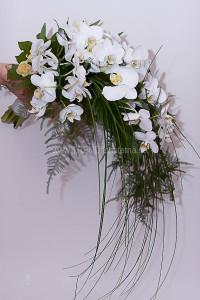 Famnbukett vita phalaenopsis