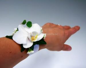 armband vit phalaenopsis