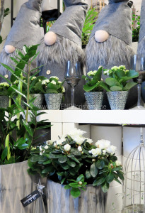 butikuppställ grå jul